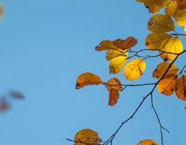 Κριτική Φωτογραφιών #4 – Φθινόπωρο (Λήξη Συμμετοχών)